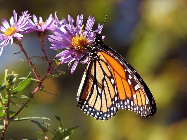 Douglas County Butterfly Trail in Douglasville, GA