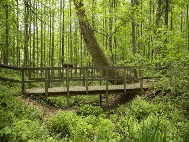 Reynolds Nature Preserve in Morrow, GA