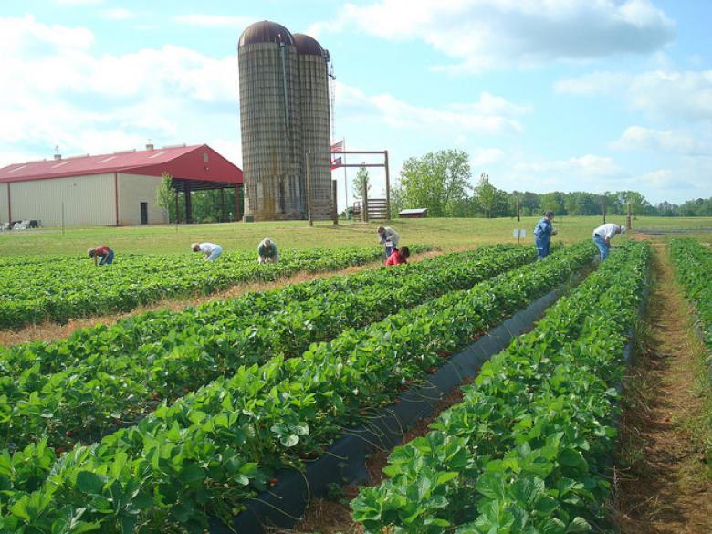 Southern Belle Farm in McDonough, GA